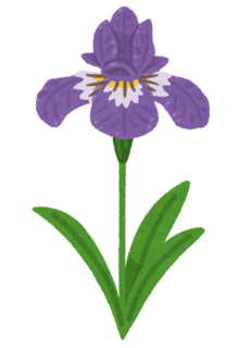 flower_ayame.png